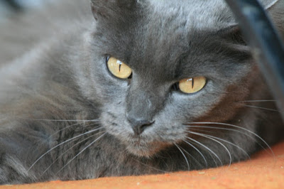 The Sofa Cat