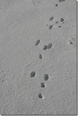 Diamond Dust and Rabbit Tracks