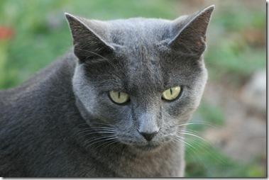 Minnie, the Velcro Cat
