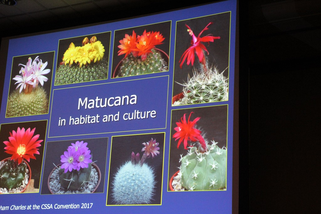 Yes, Virginia, There is such a thing as a cactus convention